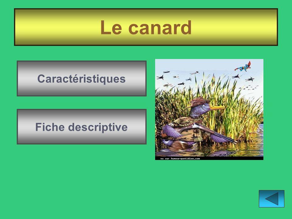 Le canard Caractéristiques Fiche descriptive