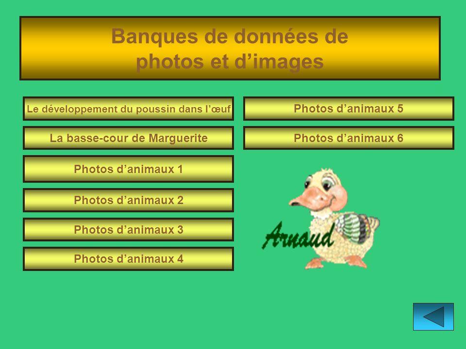 Banques de données de photos et d'images