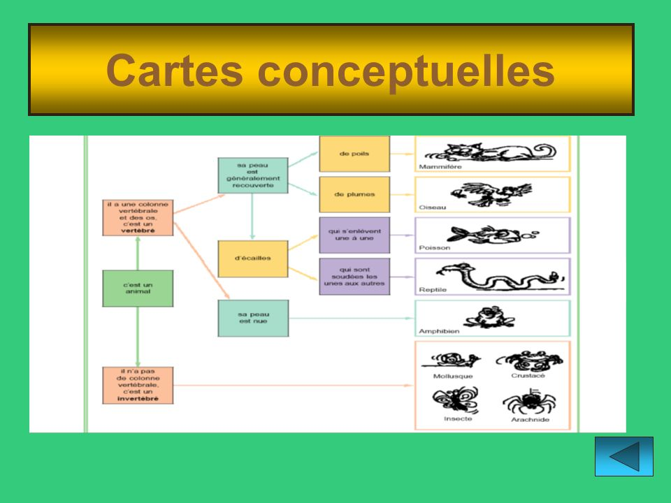 Cartes conceptuelles