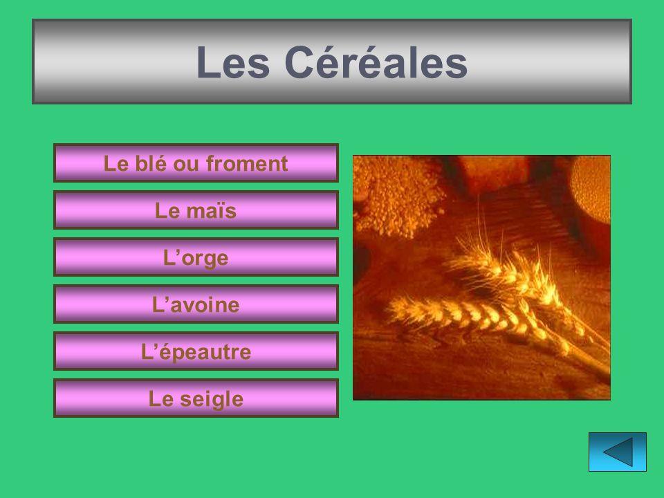 Les Céréales Le blé ou froment Le maïs L'orge L'avoine L'épeautre