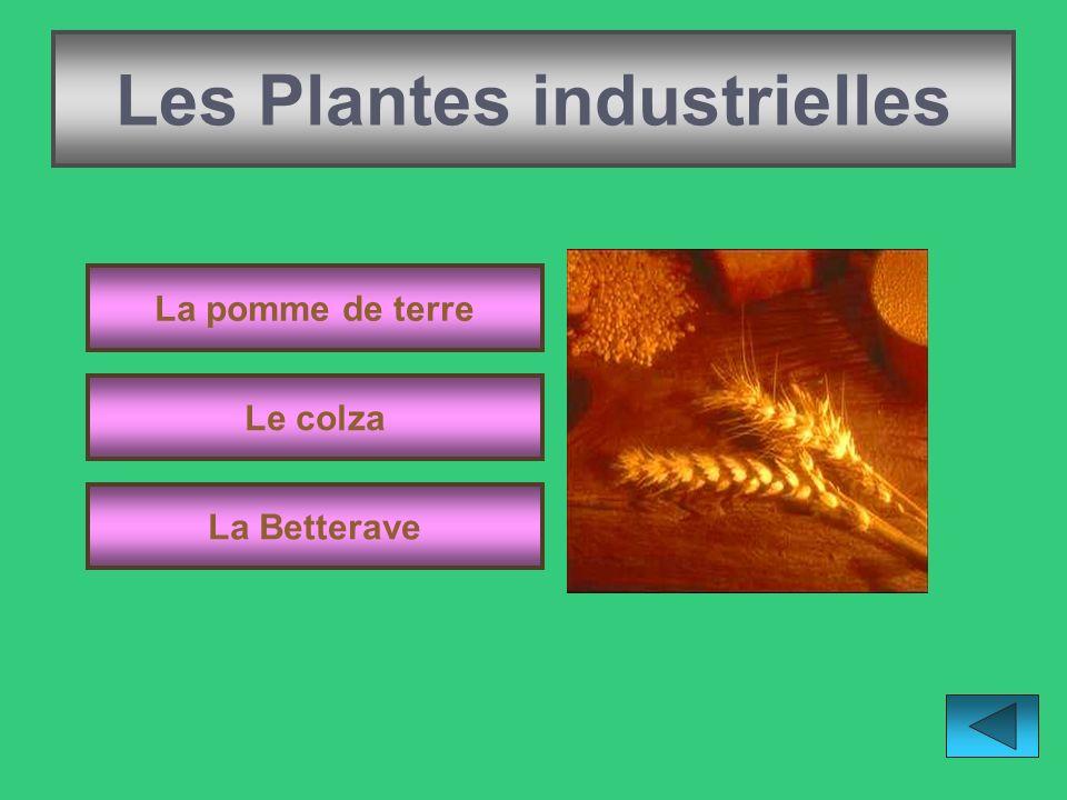 Les Plantes industrielles