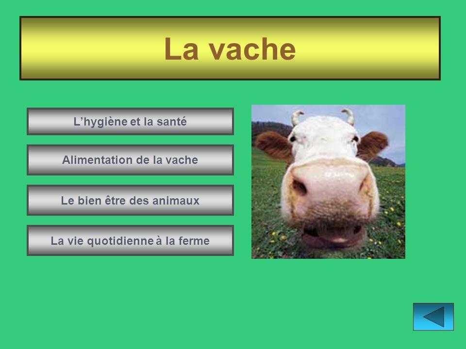 La vache L'hygiène et la santé Alimentation de la vache