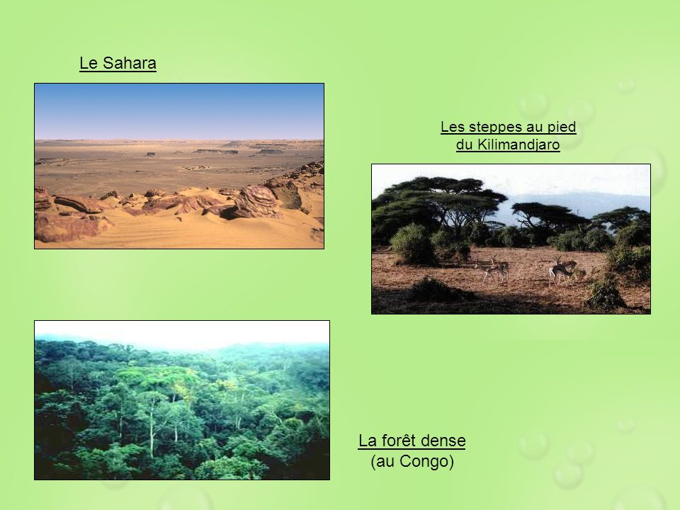 La forêt dense (au Congo)