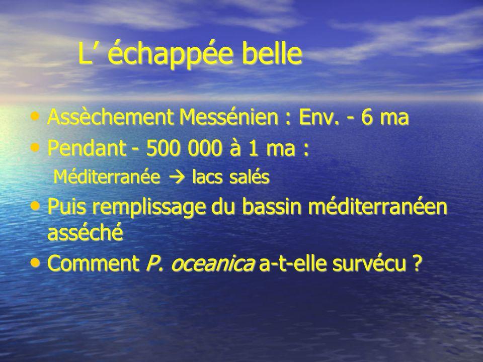 L' échappée belle Assèchement Messénien : Env. - 6 ma