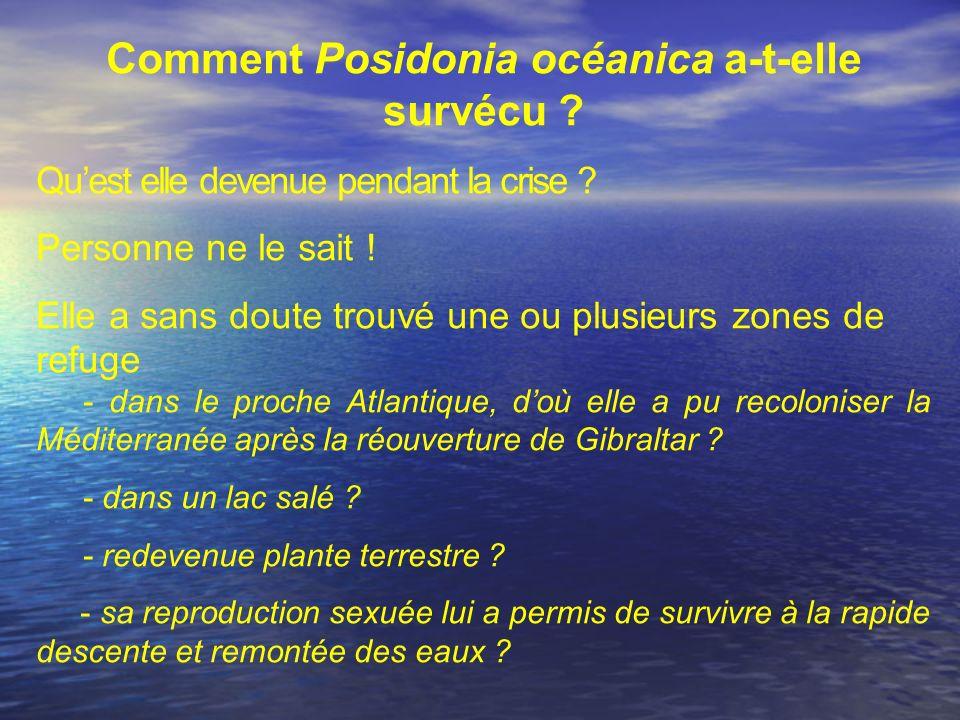 Comment Posidonia océanica a-t-elle survécu