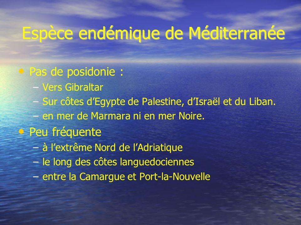 Espèce endémique de Méditerranée