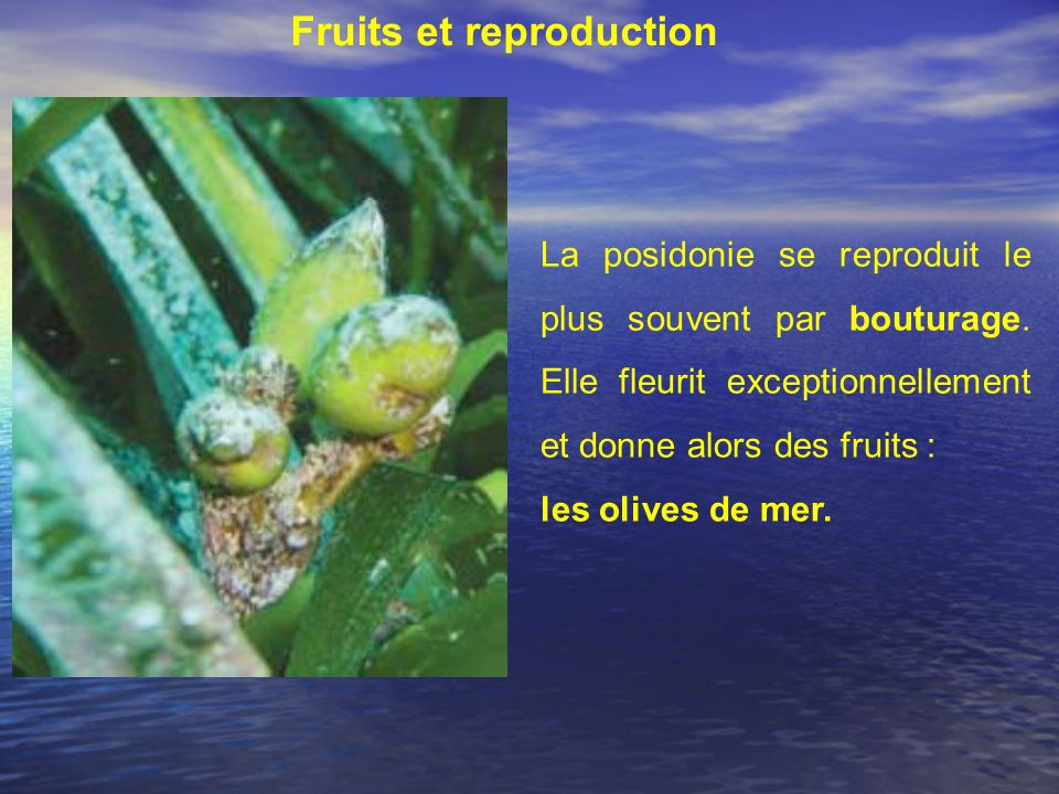 Fruits et reproduction
