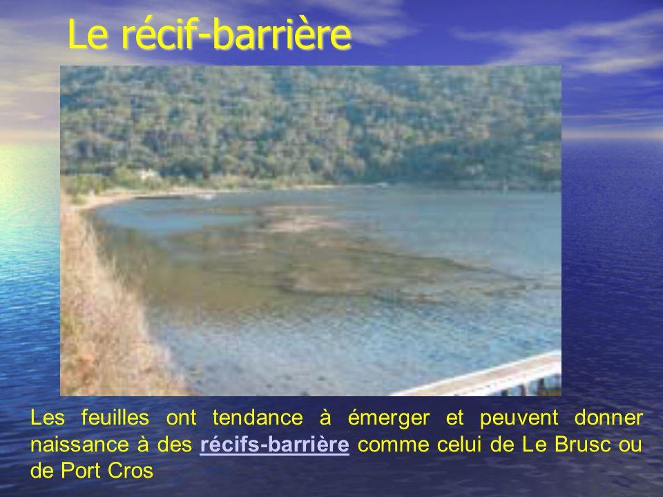 Le récif-barrière