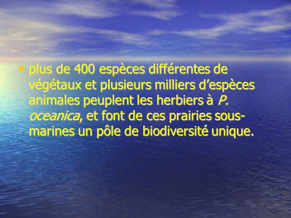 plus de 400 espèces différentes de végétaux et plusieurs milliers d'espèces animales peuplent les herbiers à P.