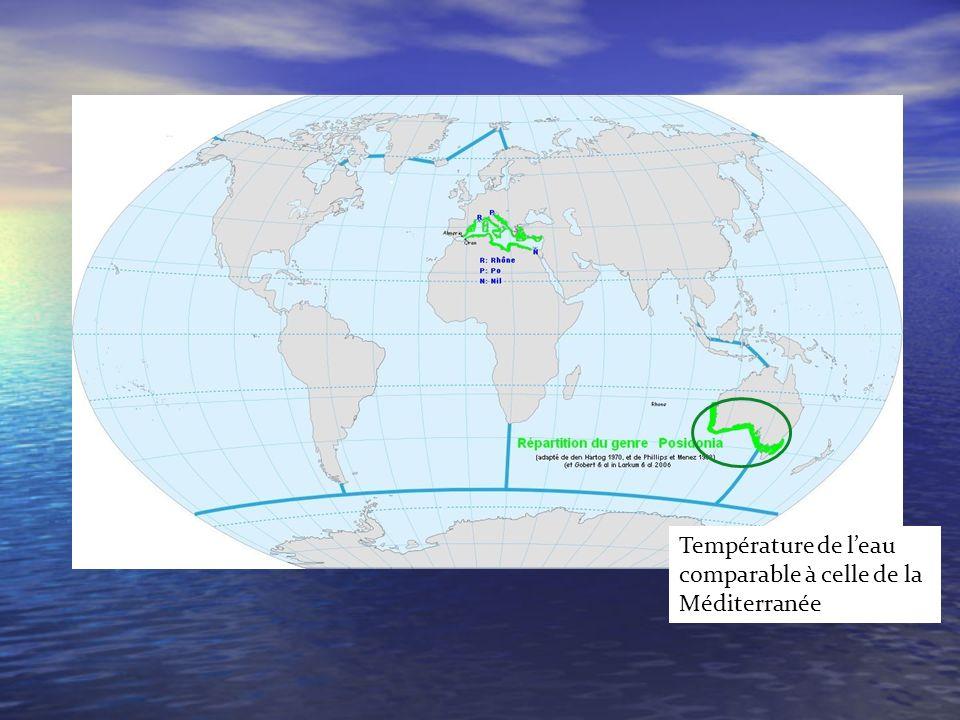 Température de l'eau comparable à celle de la Méditerranée