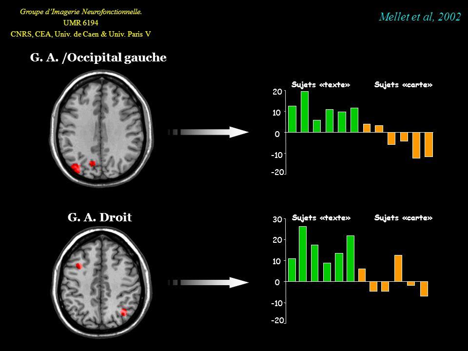 G. A. /Occipital gauche G. A. Droit