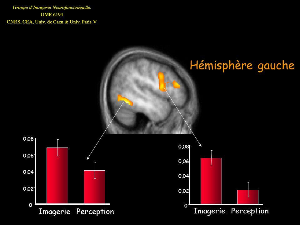 Hémisphère gauche Imagerie Perception Imagerie Perception 0,08 0,08