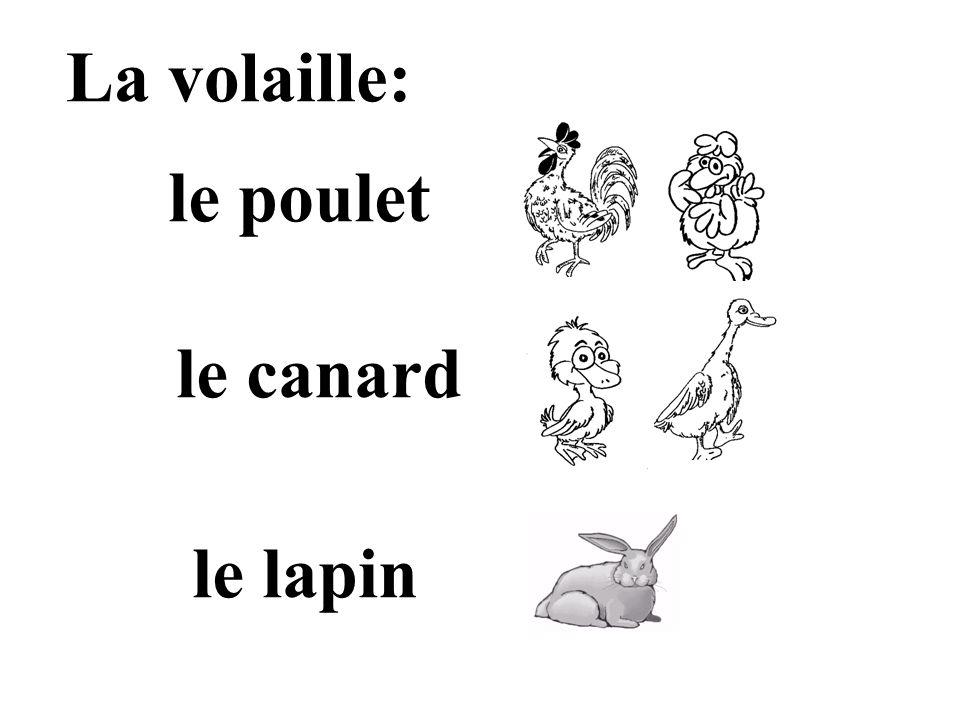 La volaille: le poulet le canard le lapin