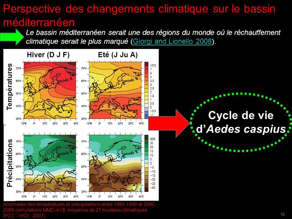 Cycle de vie d'Aedes caspius