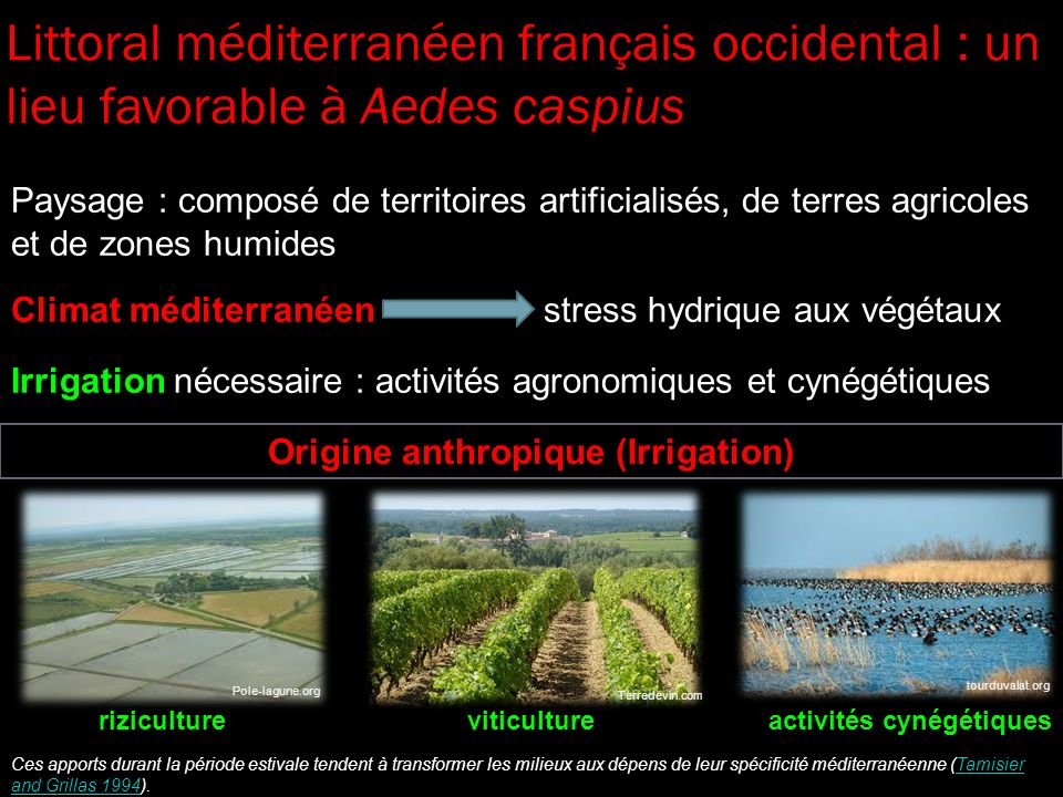 Origine anthropique (Irrigation)