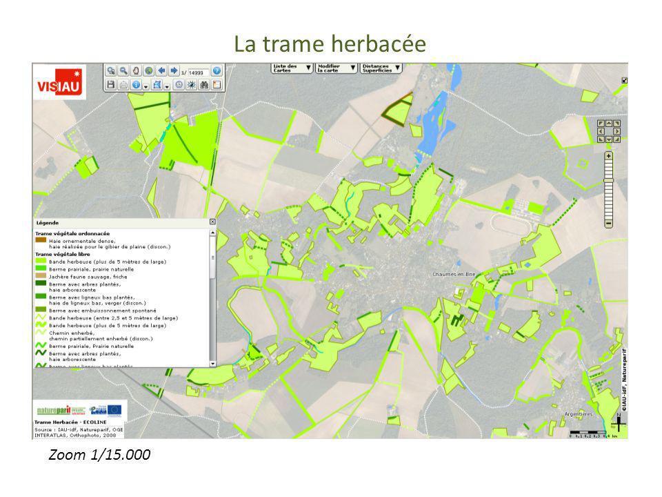 La trame herbacée Trame herbacée Zoom 15000 Zoom 1/15.000