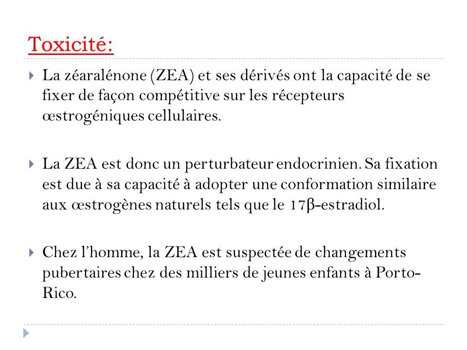 Toxicité: La zéaralénone (ZEA) et ses dérivés ont la capacité de se fixer de façon compétitive sur les récepteurs œstrogéniques cellulaires.