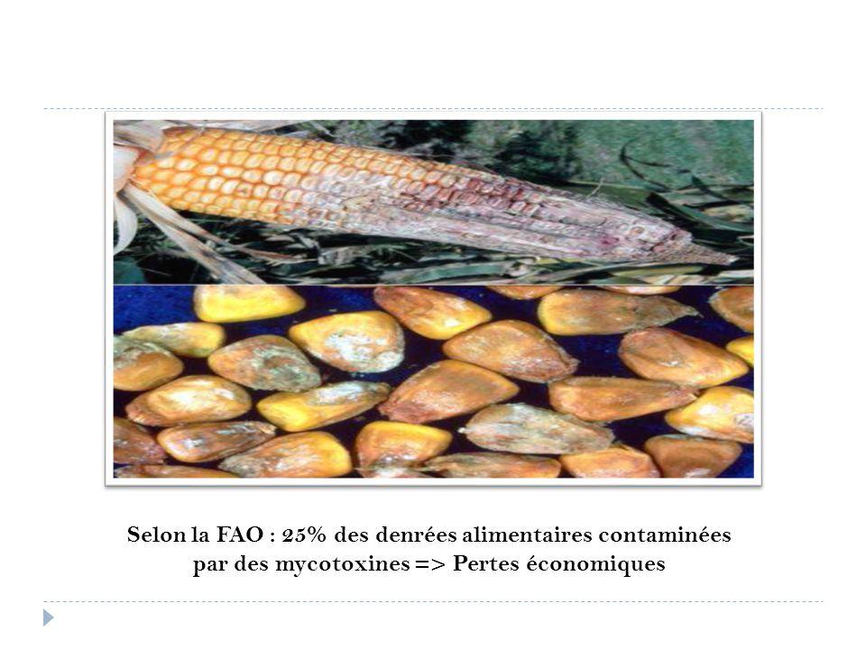 Selon la FAO : 25% des denrées alimentaires contaminées par des mycotoxines => Pertes économiques
