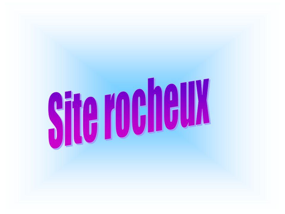 Site rocheux