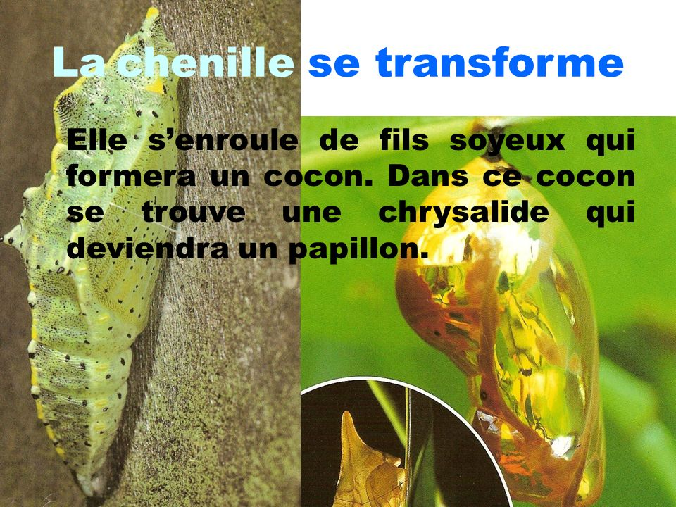 Chenille qui se transforme en papillon 11 la for Meuble qui se transforme