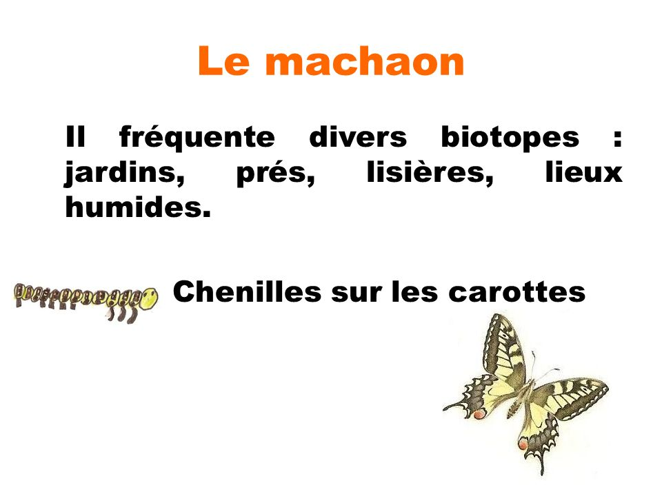Le machaon Il fréquente divers biotopes : jardins, prés, lisières, lieux humides.