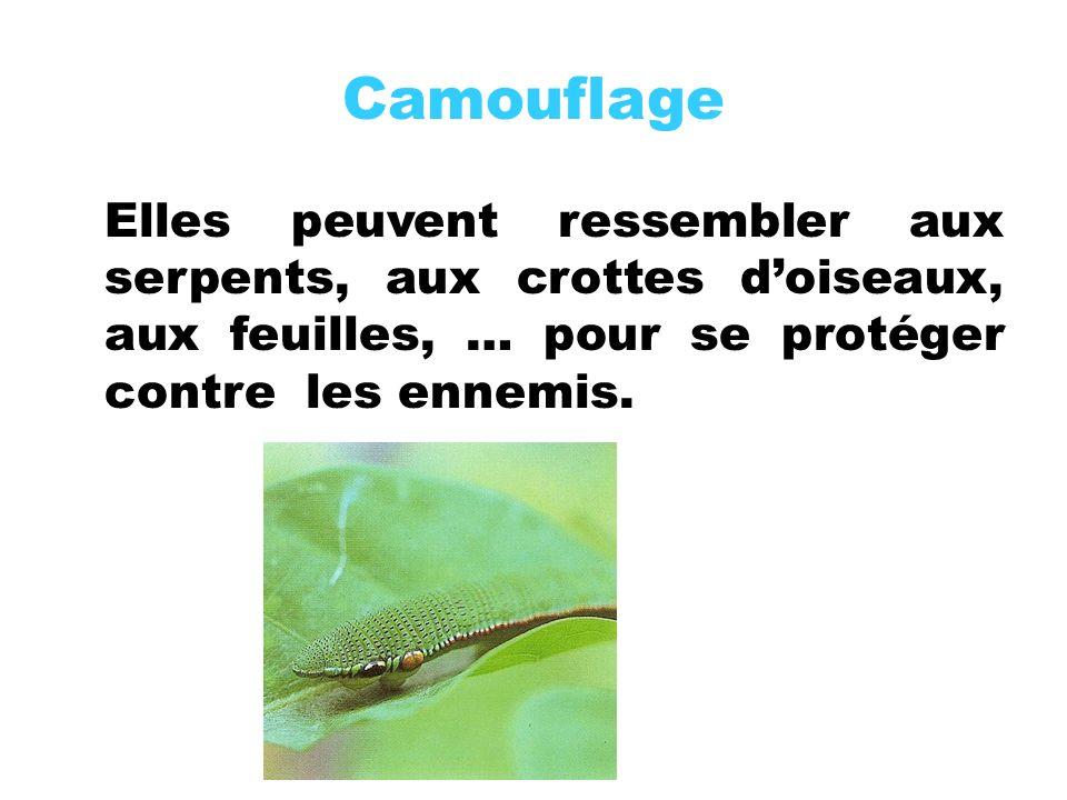Camouflage Elles peuvent ressembler aux serpents, aux crottes d'oiseaux, aux feuilles, … pour se protéger contre les ennemis.