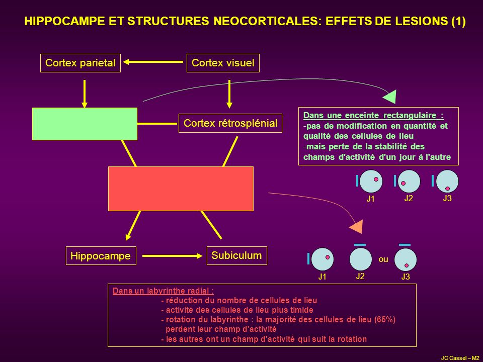 HIPPOCAMPE ET STRUCTURES NEOCORTICALES: EFFETS DE LESIONS (1)