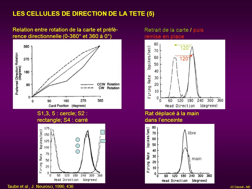 LES CELLULES DE DIRECTION DE LA TETE (5)