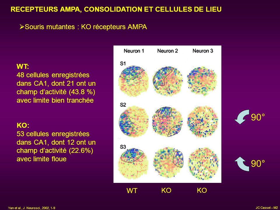 90° RECEPTEURS AMPA, CONSOLIDATION ET CELLULES DE LIEU