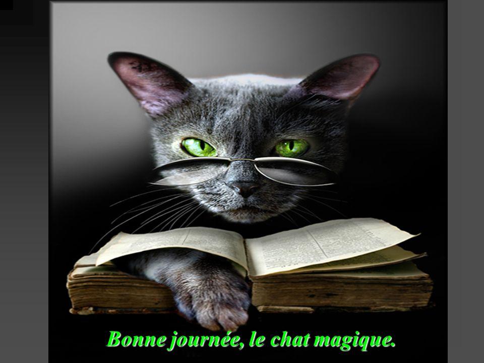 Bonne journée, le chat magique.