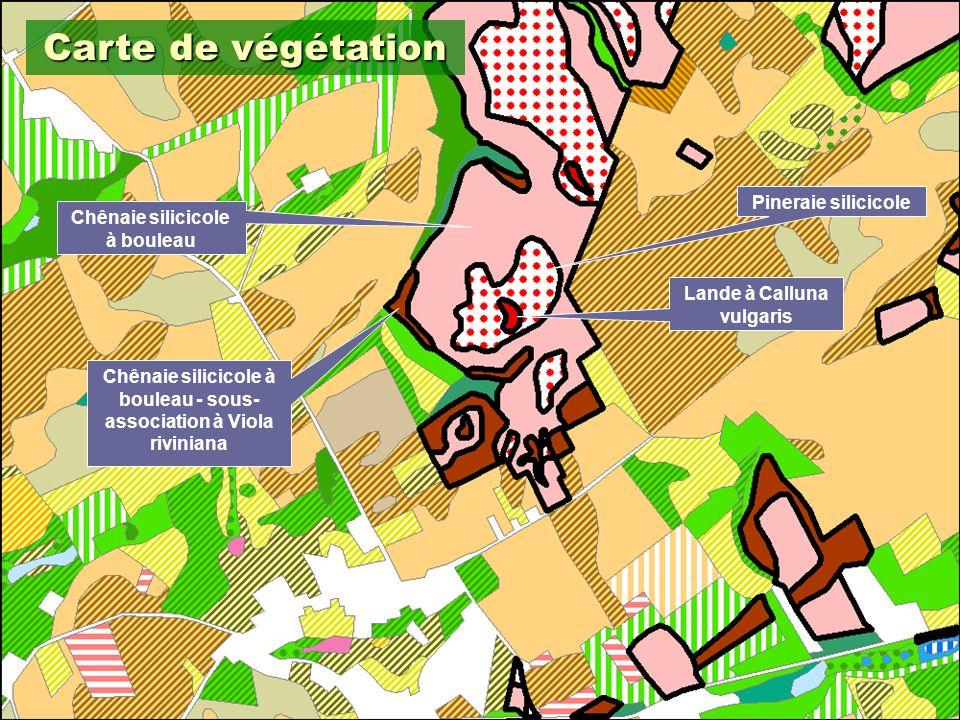 Carte de végétation Pineraie silicicole Chênaie silicicole à bouleau