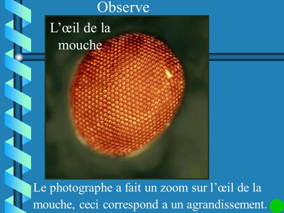 Observe L'œil de la mouche