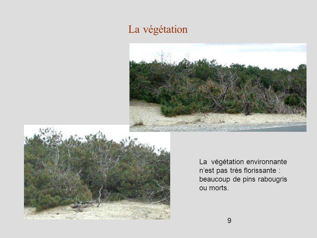 La végétation La végétation environnante n'est pas très florissante : beaucoup de pins rabougris ou morts.