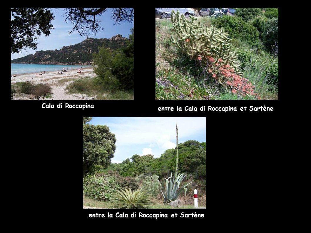 entre la Cala di Roccapina et Sartène