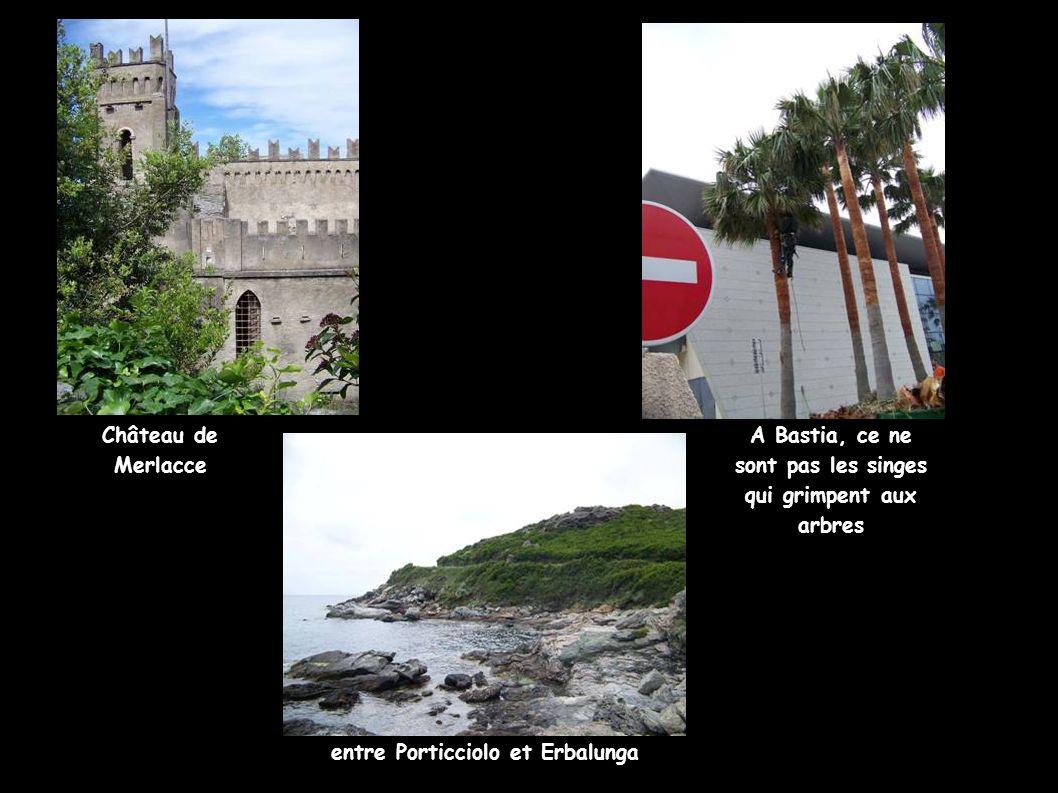 A Bastia, ce ne sont pas les singes qui grimpent aux arbres