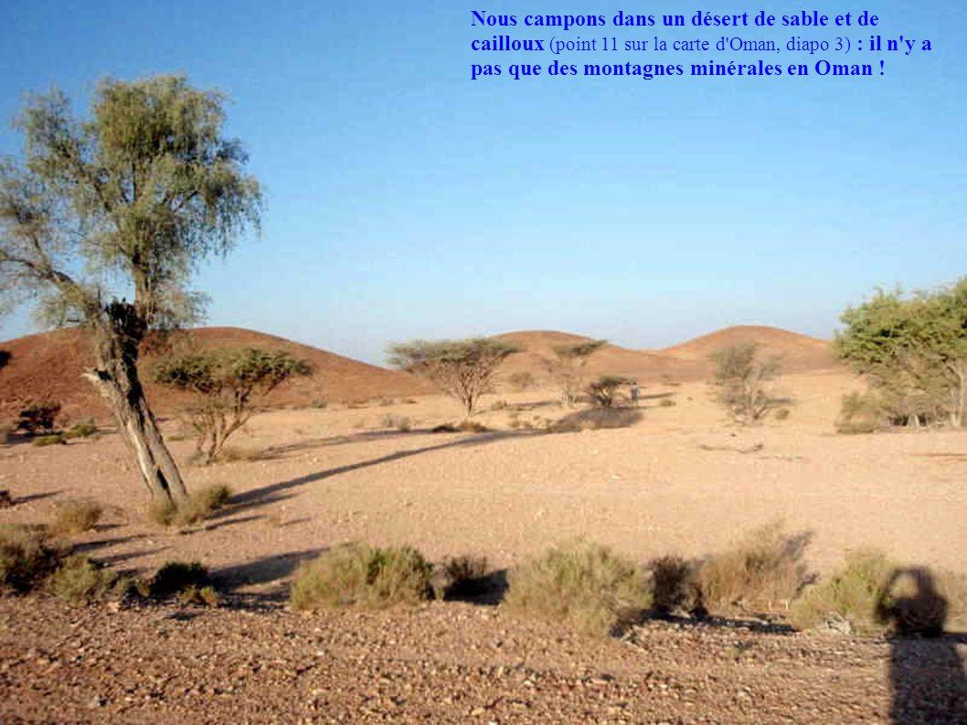 Nous campons dans un désert de sable et de cailloux (point 11 sur la carte d Oman, diapo 3) : il n y a pas que des montagnes minérales en Oman !
