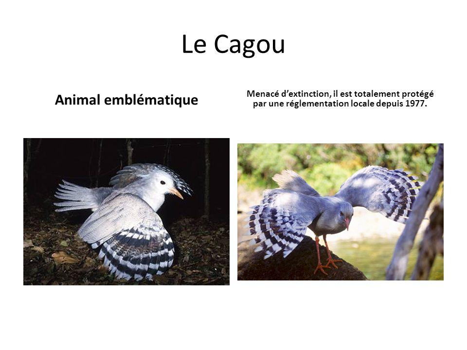 Le Cagou Animal emblématique