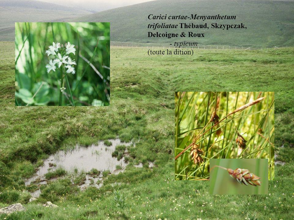 Carici curtae-Menyanthetum trifoliatae Thébaud, Skzypczak, Delcoigne & Roux