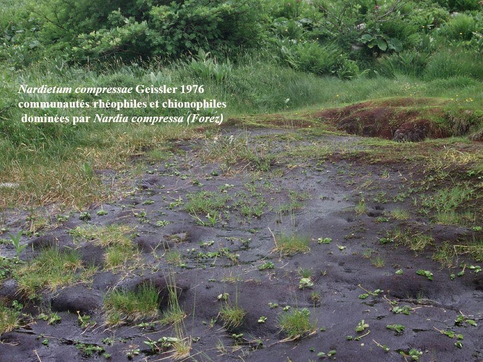 Nardietum compressae Geissler 1976