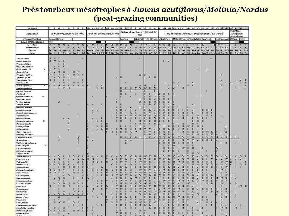 Prés tourbeux mésotrophes à Juncus acutiflorus/Molinia/Nardus (peat-grazing communities)