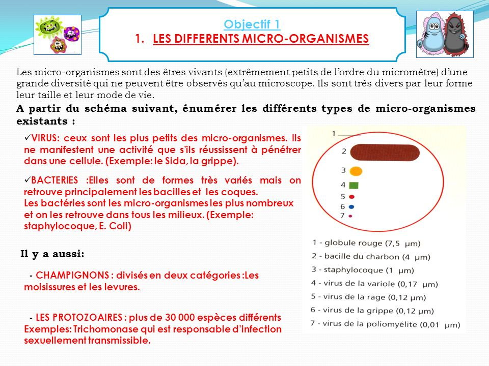 LES DIFFERENTS MICRO-ORGANISMES