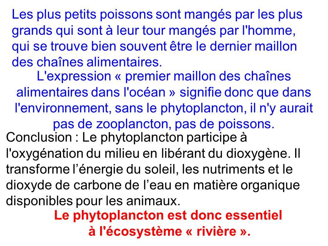 Le phytoplancton est donc essentiel à l écosystème « rivière ».