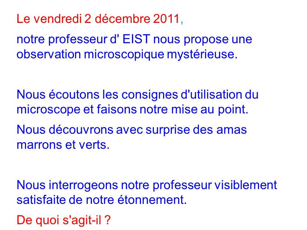 Le vendredi 2 décembre 2011, notre professeur d EIST nous propose une observation microscopique mystérieuse.