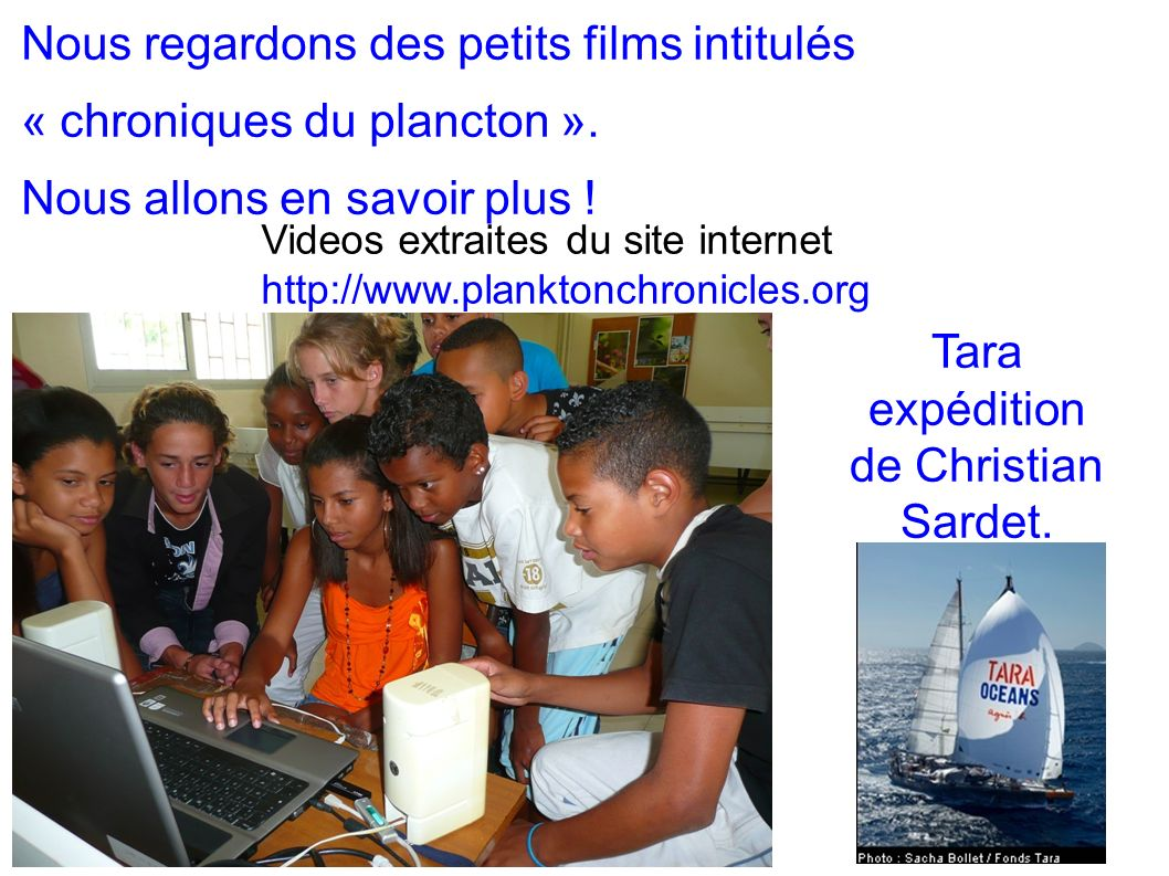 Nous regardons des petits films intitulés « chroniques du plancton ».