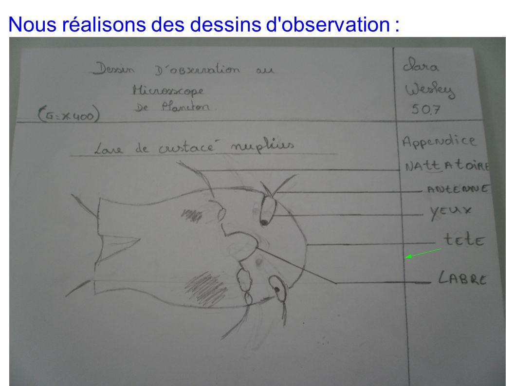 Nous réalisons des dessins d observation :
