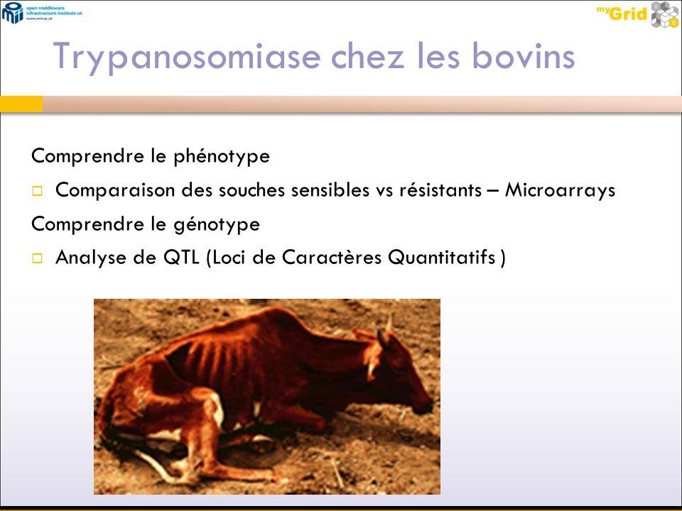 Trypanosomiase chez les bovins