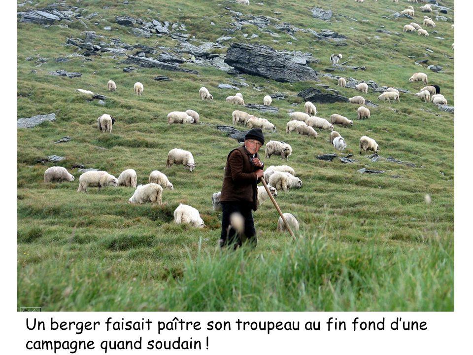 Un berger faisait paître son troupeau au fin fond d'une campagne quand soudain !