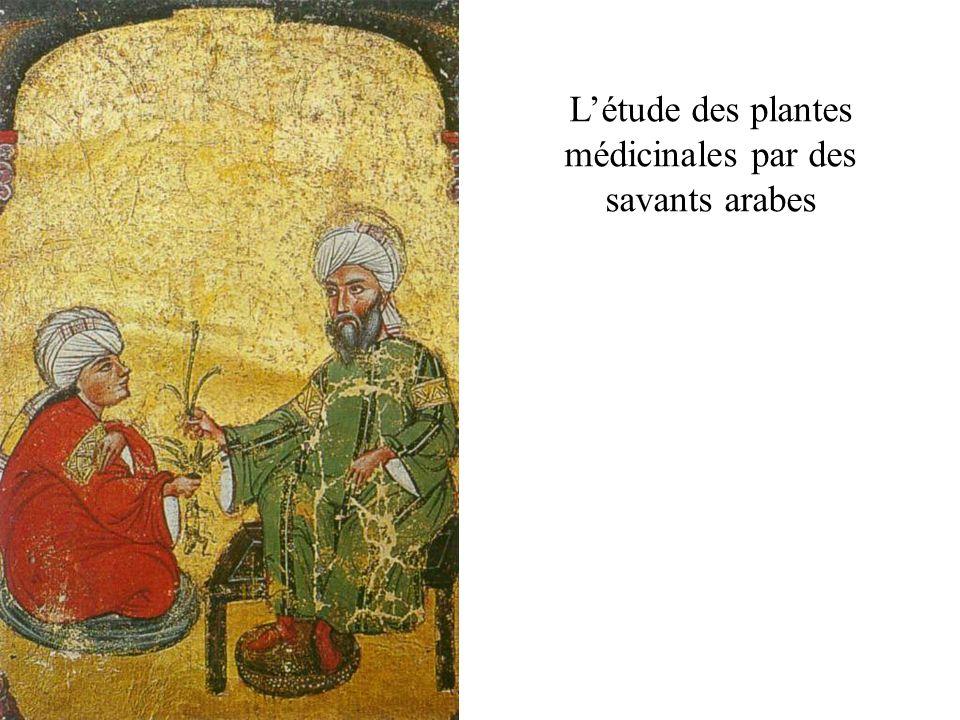 L'étude des plantes médicinales par des savants arabes
