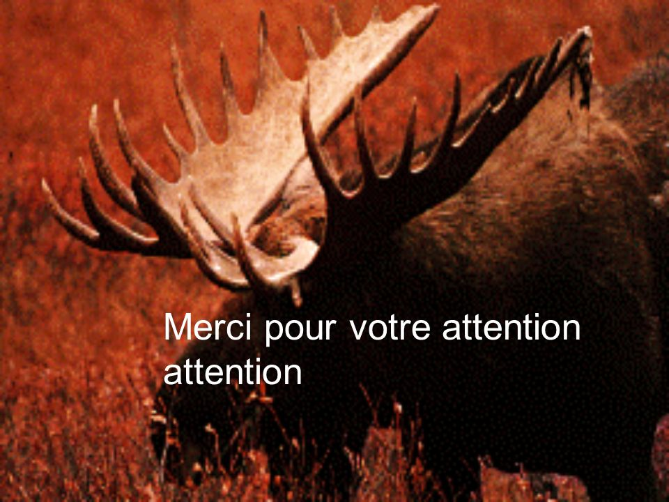 Merci pour votre attention attention