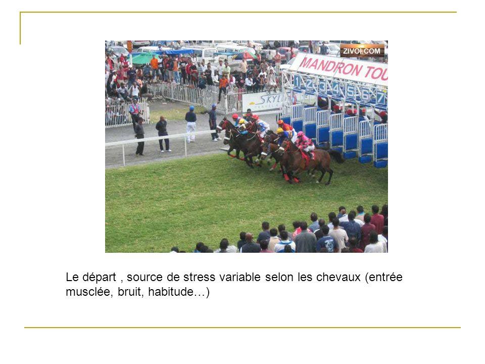 Le départ , source de stress variable selon les chevaux (entrée musclée, bruit, habitude…)